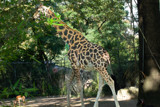 Too Tall by Ramad, photography->animals gallery