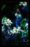 Predator by jesouris, Photography->Nature gallery