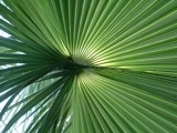 Palmleaf by Plinius, Photography->Textures gallery