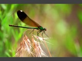 Flight 405 to Tower - Ready For Take Off by photoimagery, Photography->Insects/Spiders gallery