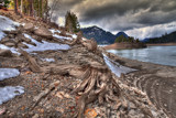 Gnarly by DigiCamMan, photography->manipulation gallery