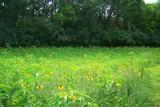 Roadside Wildflowers by kidder, Photography->Flowers gallery