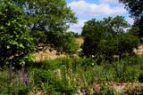 Stotts Garden_Back Garden View by tigger3, photography->gardens gallery