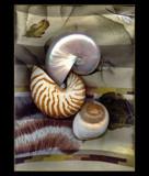 Seashell Still Life by verenabloo, Photography->Still life gallery