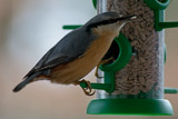 Nuthatch by Ramad, photography->birds gallery