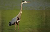 Standing Still by SatCom, Photography->Birds gallery