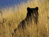 Grassy Solitude by mayne, Photography->Animals gallery