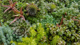 desktop_wallpaper___succulent_splendor by nmsmith, photography->gardens gallery