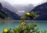 Tiny Lights On A Gloomy Day by Zava, photography->flowers gallery