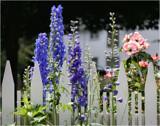 Summer Pretties by verenabloo, Photography->Flowers gallery