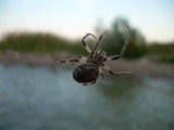 Huge Spider by Jomo, Photography->Insects/Spiders gallery