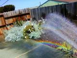 Backyard Rainbow by donman7, photography->gardens gallery