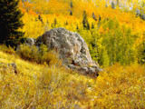Aspens on the Hillside by ChuPat, Photography->Landscape gallery