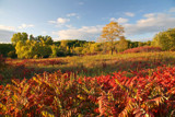 Crimson Fields by Silvanus, photography->landscape gallery