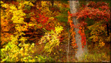 Seasonal Color by tigger3, photography->nature gallery