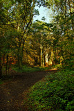 Watergate Woods by biffobear, photography->landscape gallery
