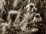 Late Summer -B&W by trixxie17, contests->b/w challenge gallery
