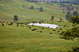 Buffalo grazing on the Wildlife loop at Custer State park in by Gergie, photography->animals gallery