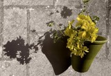 Potted Shadows by MrsB, photography->flowers gallery