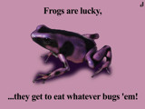 Lucky Frog by Jhihmoac, photography->manipulation gallery