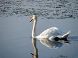 Grace by SatCom, Photography->Birds gallery