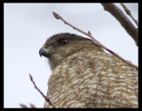 Eye of the Hunter by garrettparkinson, Photography->Birds gallery