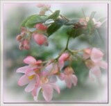 Trailing Begonia by LynEve, photography->flowers gallery