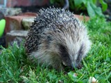 spike by shrink, photography->animals gallery