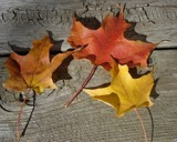 Fall Still Life by MathKing99, Photography->Still life gallery
