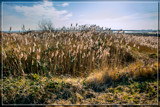 Riverbank Grasses by corngrowth, photography->shorelines gallery