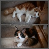 Pierre & Lulu by tadurham, photography->pets gallery