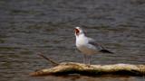 say aaaaaah... by jeffpratt, Photography->Birds gallery