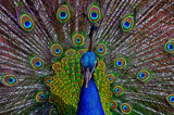 Ello Ello.. by biffobear, photography->birds gallery