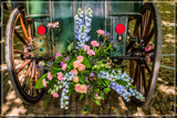 Gig Foofies 50 by corngrowth, photography->flowers gallery