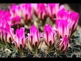 Prickly Situation by photoimagery, Photography->Flowers gallery