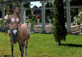 Centaur by gabriela2006, Photography->Manipulation gallery