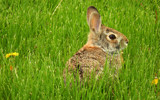 Looking For Bunny by 0930_23, photography->animals gallery