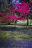 Dogwood Spring Light 2 by chris_f2005, photography->landscape gallery
