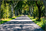 Canopied Country Road by corngrowth, photography->landscape gallery