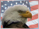 Don't Mess with America by houstonaxl, Photography->Manipulation gallery