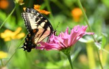 From Ruby's Garden Of Plenty by tigger3, photography->butterflies gallery