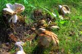 Mushrooms by wbetz13, Photography->Mushrooms gallery