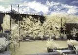 My garden IR by biffobear, Photography->Gardens gallery