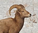Dodge by DigiCamMan, photography->animals gallery