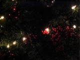 Oh Christmas Tree! by LandonC, Holidays->Christmas gallery
