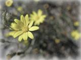 Frost-Bitten by plantprincess, photography->flowers gallery