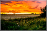 Riping Wheat At Sunset by corngrowth, photography->sunset/rise gallery