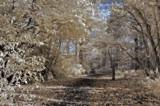 A stroll through Narnia 2 by biffobear, photography->landscape gallery