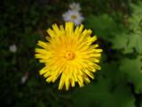 Sunburst by smarti_J, Photography->Flowers gallery