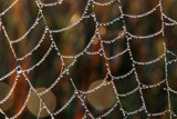 Jewelled Web by Silvanus, photography->nature gallery